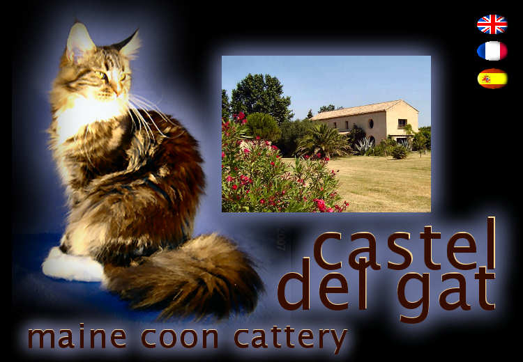 Castel Del Gat, Maine Coon cattery.